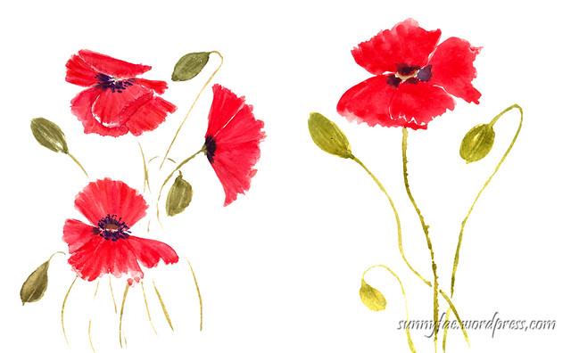 watercolour poppy studies