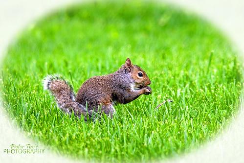 Squirrel  (26)