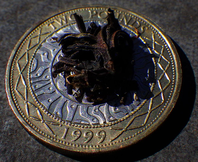 Loose Leaf Tea on a British Two Pound Coin