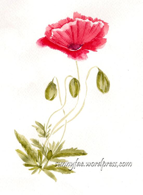 watercolour poppy