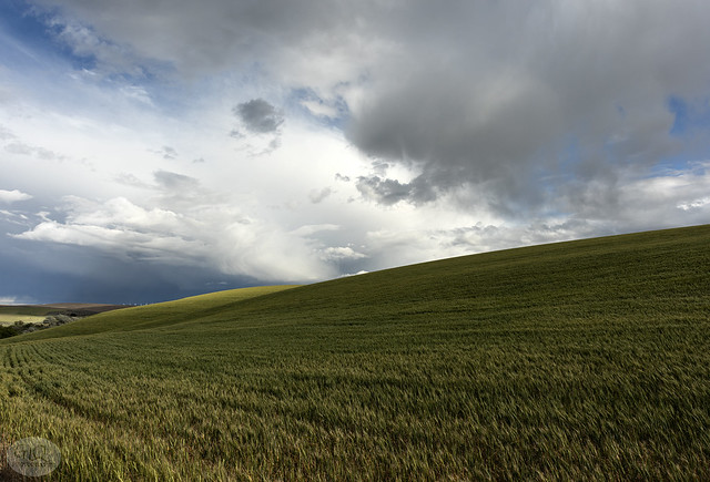 Eastern Oregon Wheat, Route 206