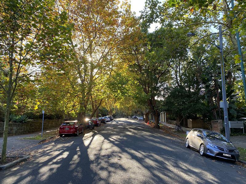 Hazelbank Road, morning