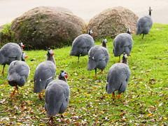 Werribee Zoo 0620 4297
