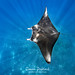 Reef Manta Ray - Photo (c) DocTroll, some rights reserved (CC BY-NC-ND)