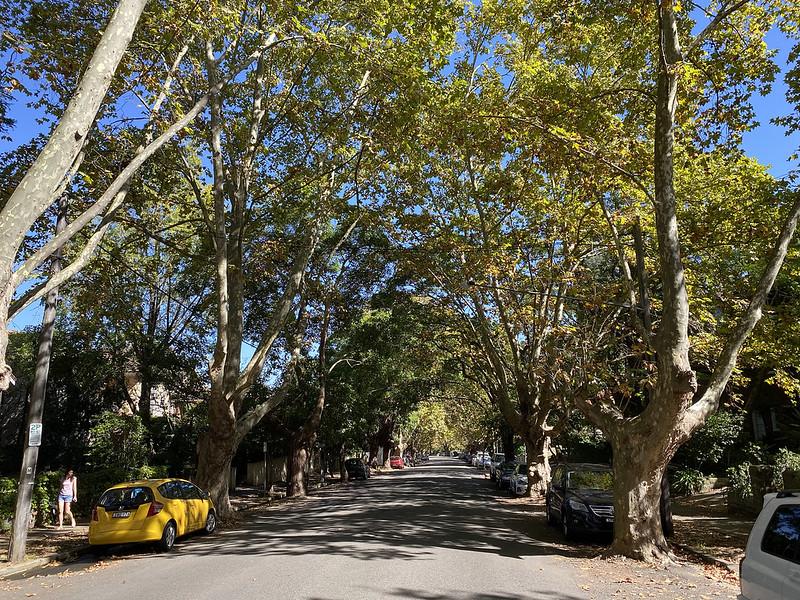 Hazelbank Road, midday