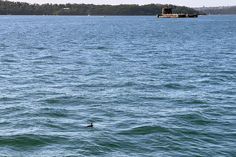 Cormorant and Fort Denison