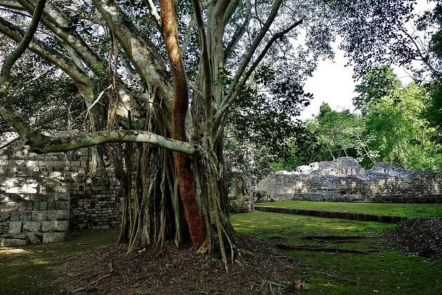 MEXICO, Becán , archäologische Stätte und vormaliges Zentrum der Maya der präklassischen Periode,   19799/12729
