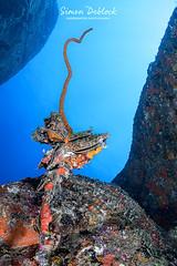 Moules seychelloises