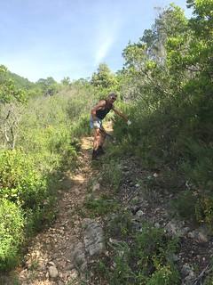 Travaux sur le PR6 entre Punta Piana et le ruisseau de Ranedda