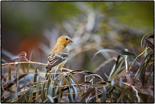 Another bird shot.