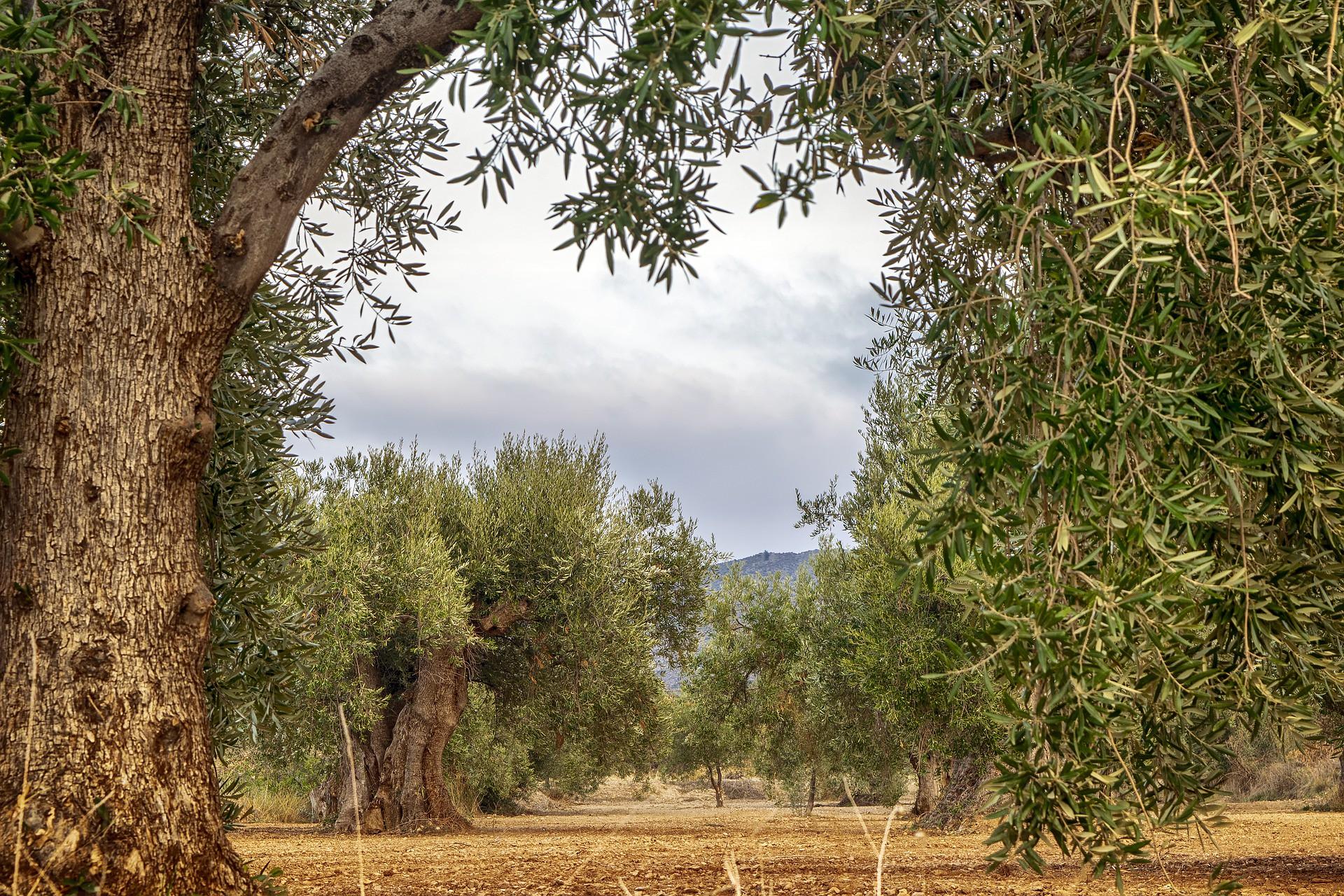 Casas rurales en Andalucía para viajar en familia