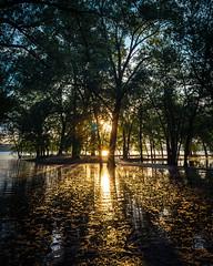 Sunset Through Flooded Trees