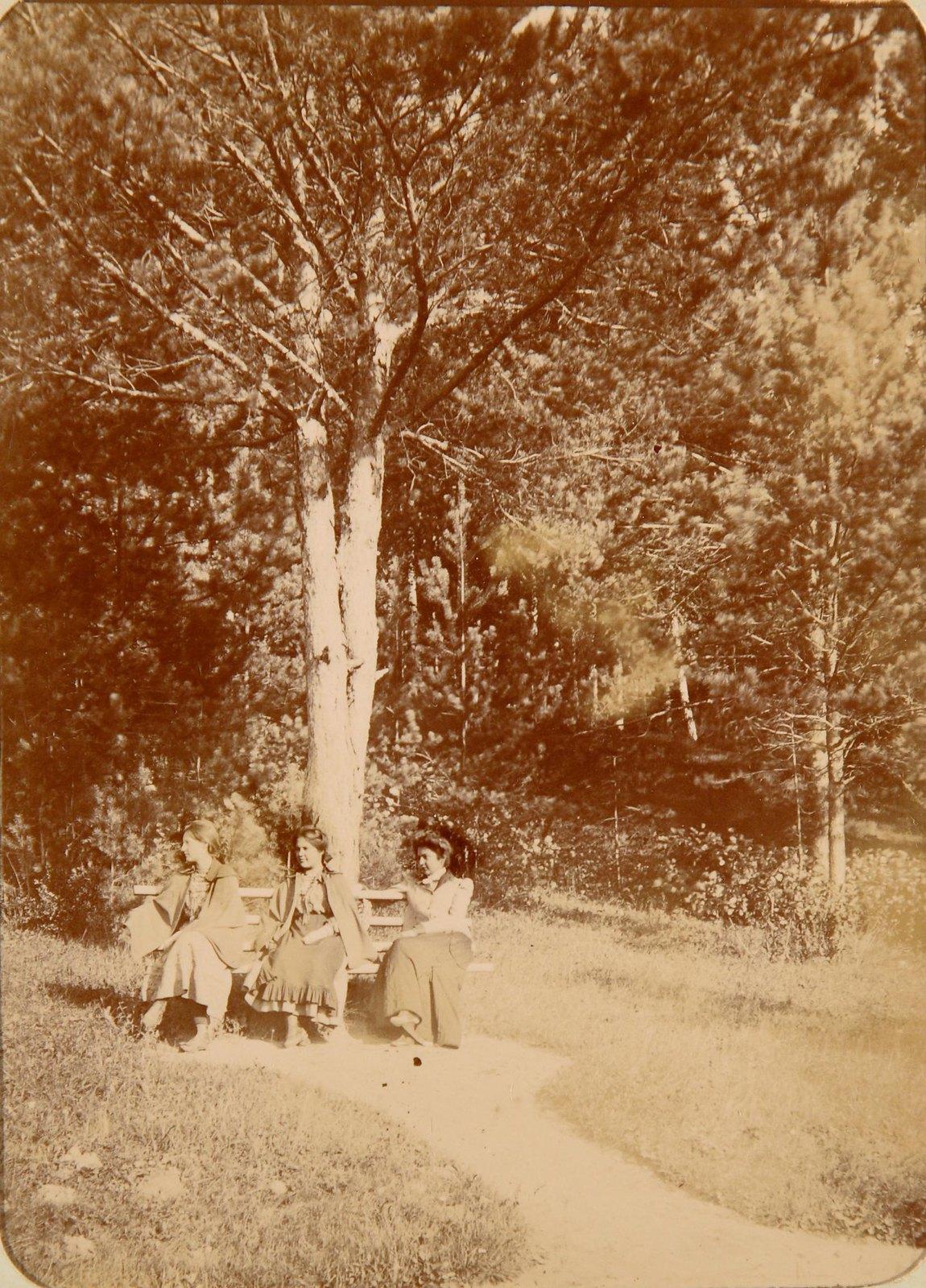 24. Три девушки на скамейке в парке под деревом