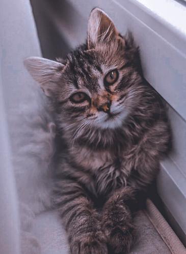 cat catlover catloves