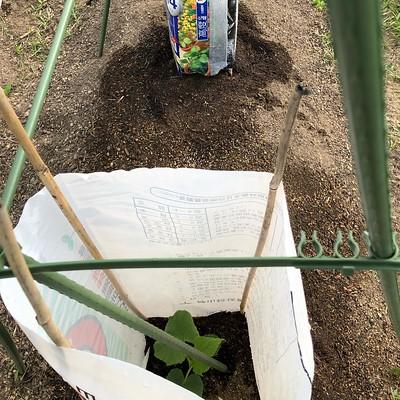 この辺りの畑は連休明けの一週間低温できゅうりの苗が全滅したらしい。とある個人商店でやっと接木苗見つけて確保。