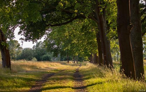 sun evening green filter abendsonne sonnenuntergang landschaft grün walk spaziergang waldweg wälder wandern woods abendstimmung naturephotography naturaufnahme beleuchtung ngc