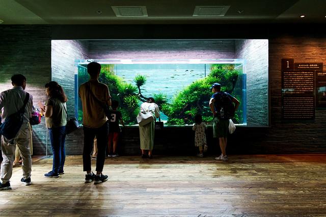 Nature Aquarium in Sumida Aquarium : 自然百景(すみだ水族館)