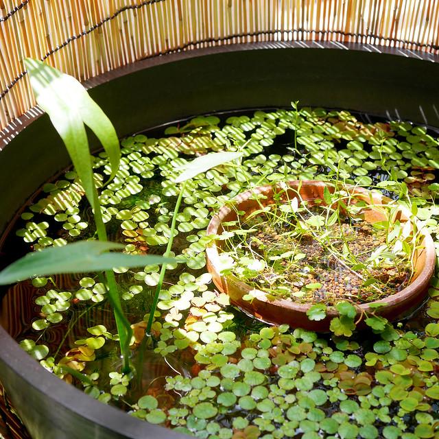 2160x2160 Mini Pond 20200609