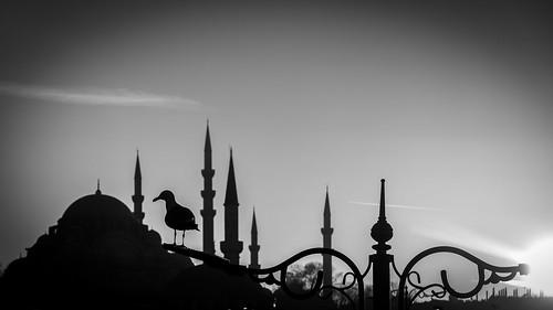 169 2019 24120mm bw crazytuesday d750 eminönü nikon architecture birds lines seagull silhouette street sunset istanbul cityscape