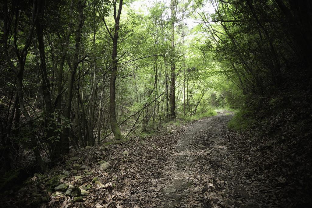 forest walk #4