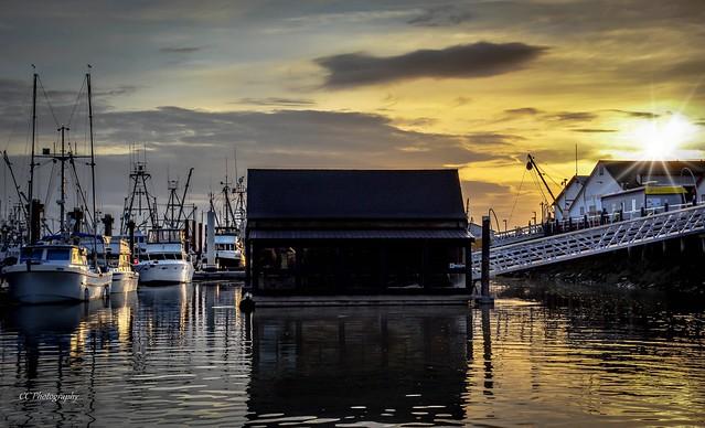 Steveston  Harbour Gold