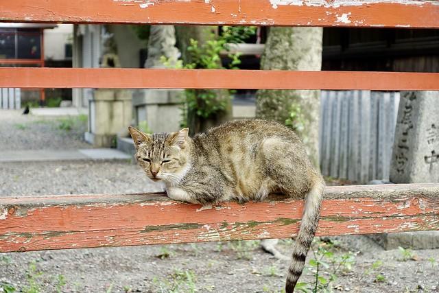 Today's Cat@2020ー06ー09