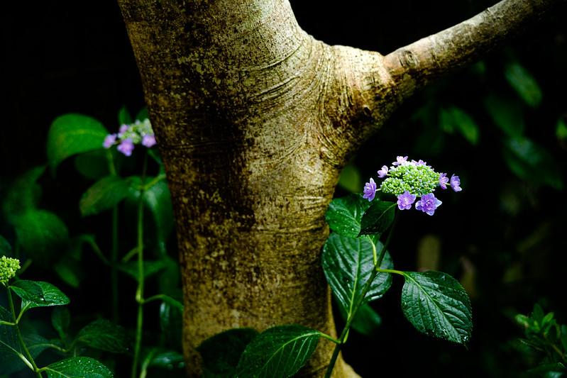 Plants in the Garden. 6/9/2020