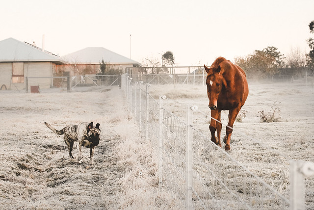 Ninj and Madge racing in the frost