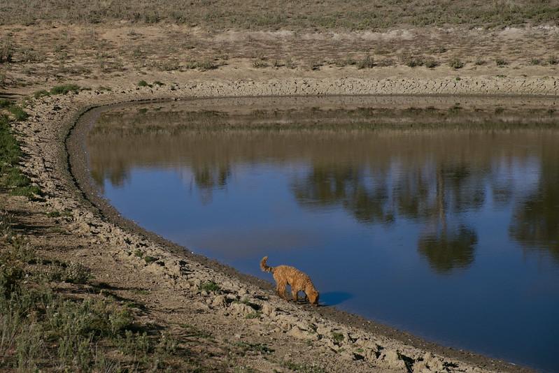Lolli at the dam