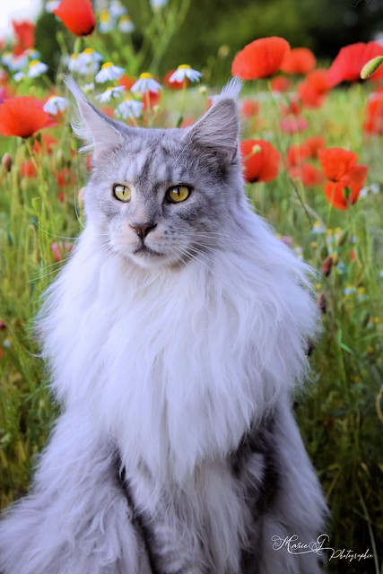 Osheen in a field of poppies