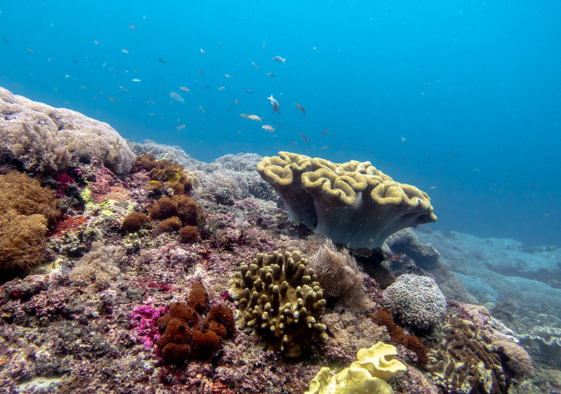 Photo of a healthy coral reef in Indonesia