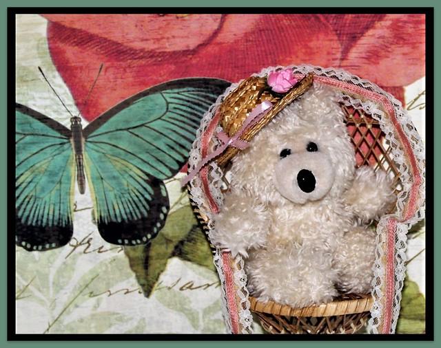 Happy Teddy Bear Tuesday