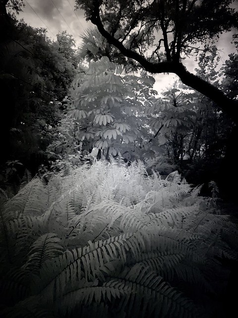 Afternoon infrared...
