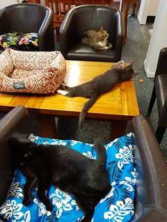 Cats at The Cat Cuddle Cafe