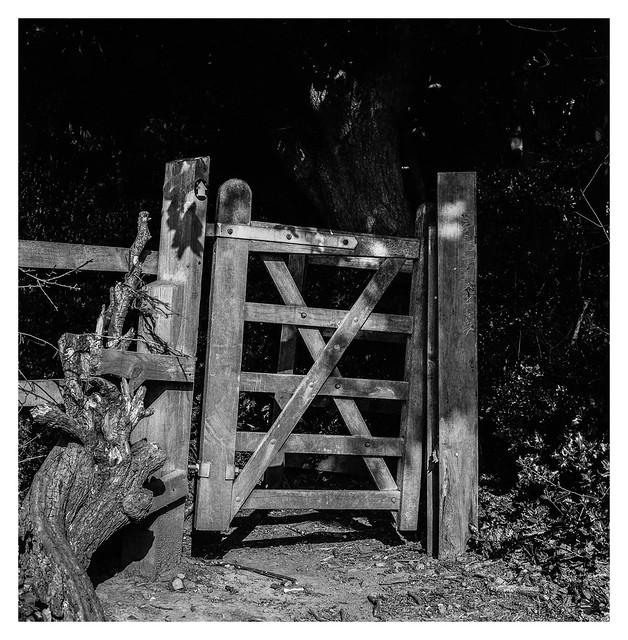 Gate in the sunshine