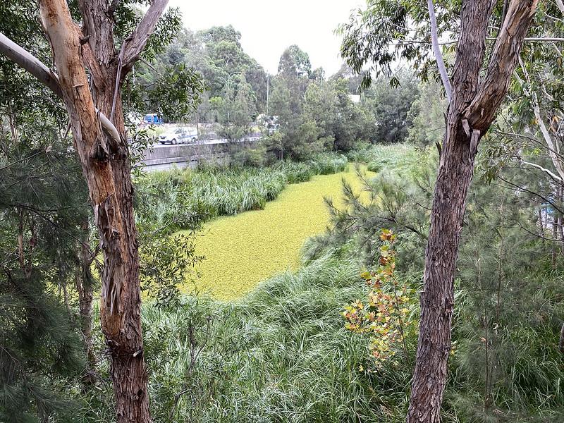 Mini wetland