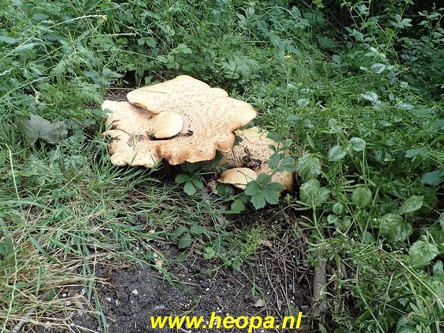 2020-06-09 Pioniers pad etappe 4 van Nagele naar Kraggeburg 25 km (1 (49)