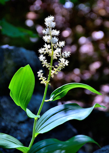 eechillington nikond7500 viewnxi flower plants utah fergusoncanyon hiking nature