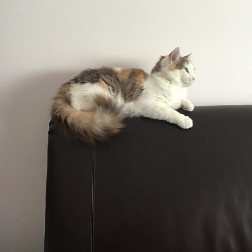 Regal Sophie