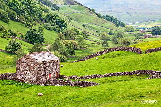 Field Barn below Kisdon Hill near Angram in Swaledale Yorkshire Dales England