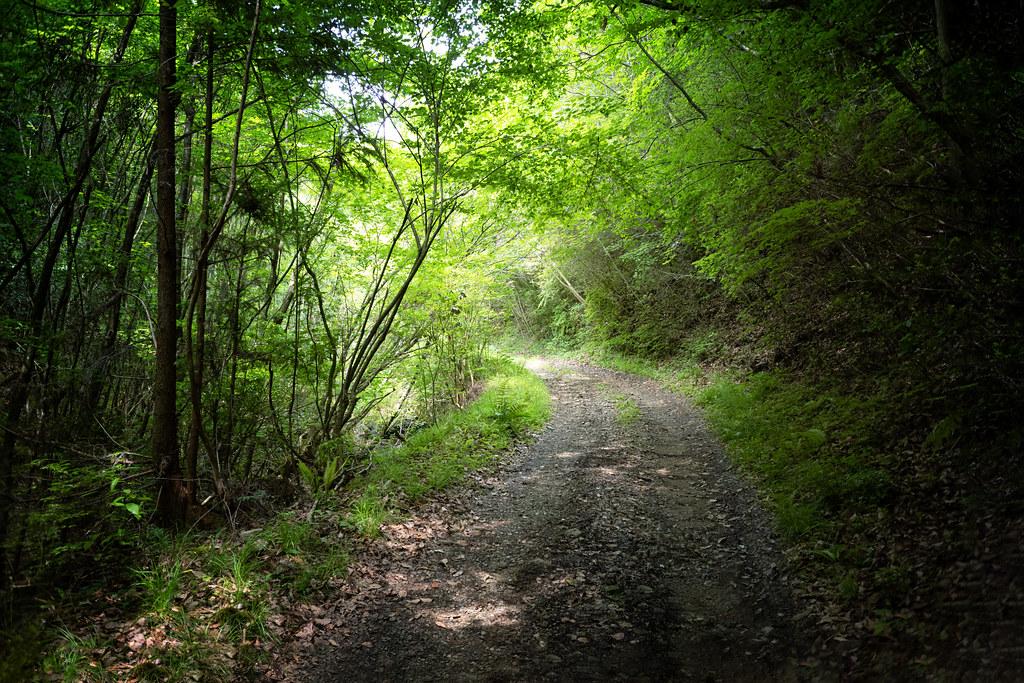 forest walk #5