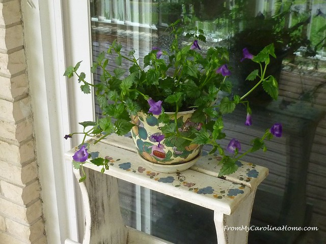June in the Garden at FromMyCarolinaHome.com