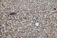 Coral and Seashells