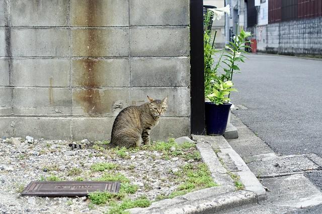 Today's Cat@2020ー06ー10