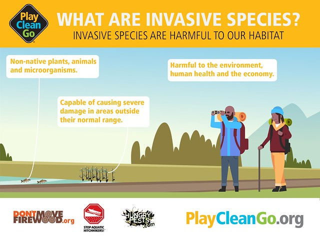 Stop Invasive Pests in Their Tracks with Tips from APHIS and PlayCleanGo this Summer – News Release
