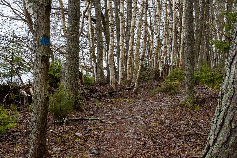 Päijänteen kansallispuisto