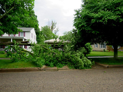 down tree across our driveway