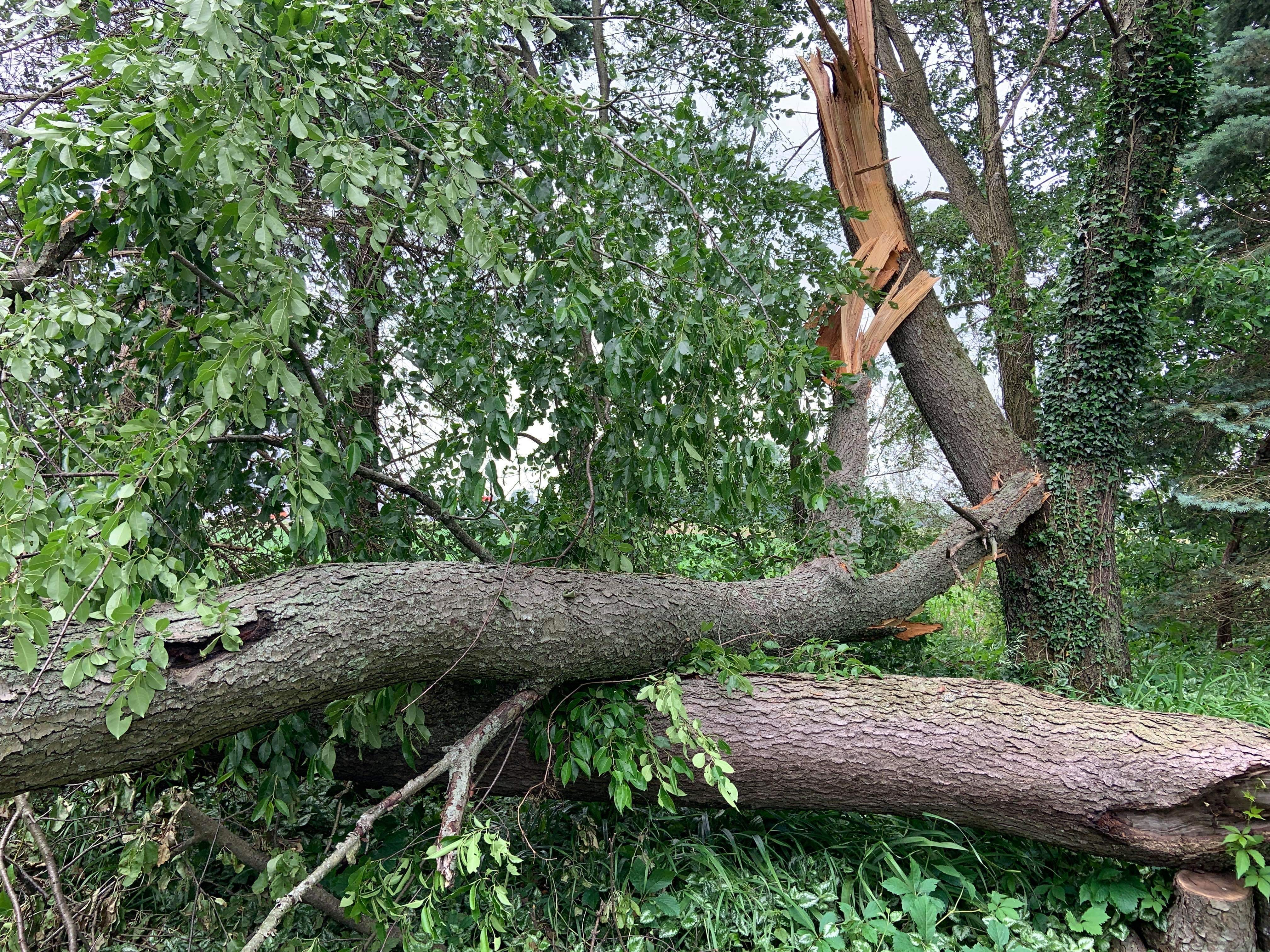 Rain, Wind, Hail and Loss of Power: How Michigan Can Brace the Storm