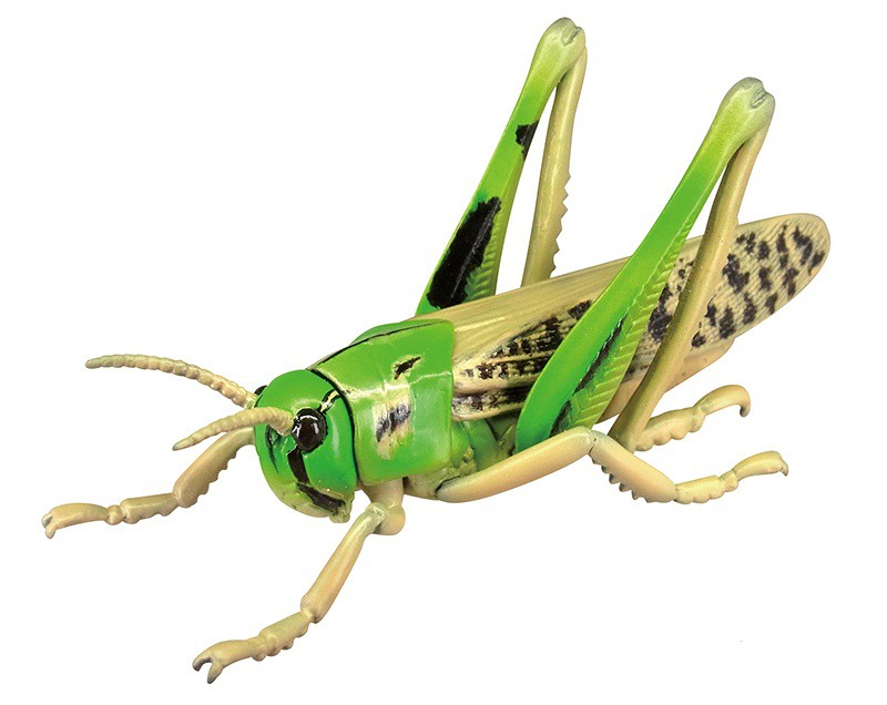 抓到狼蛛了~T-ARTS 昆蟲之森G「大襲來!巨型蜘蛛」轉蛋(昆虫の森G 大襲来!ジャイアントスパイダー)全五種