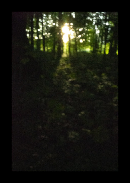 Sun in the Woods